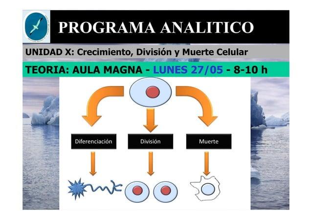 PROGRAMA ANALITICO UNIDAD X: Crecimiento, División y Muerte Celular TEORIA: AULA MAGNA - LUNES 27/05 - 8-10 h