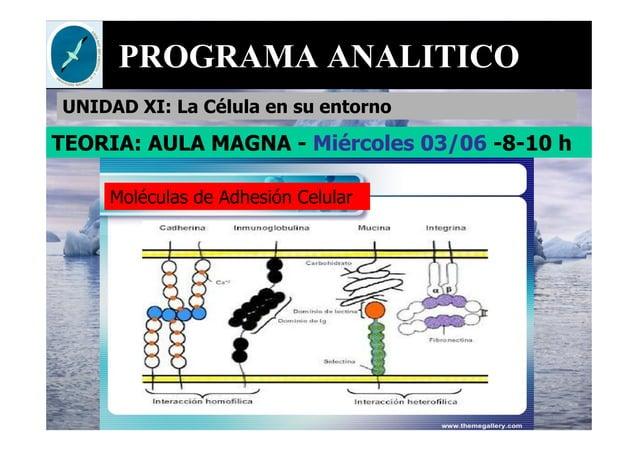 PROGRAMA ANALITICO UNIDAD XI: La Célula en su entorno Moléculas de Adhesión Celular TEORIA: AULA MAGNA - Miércoles 03/06 -...