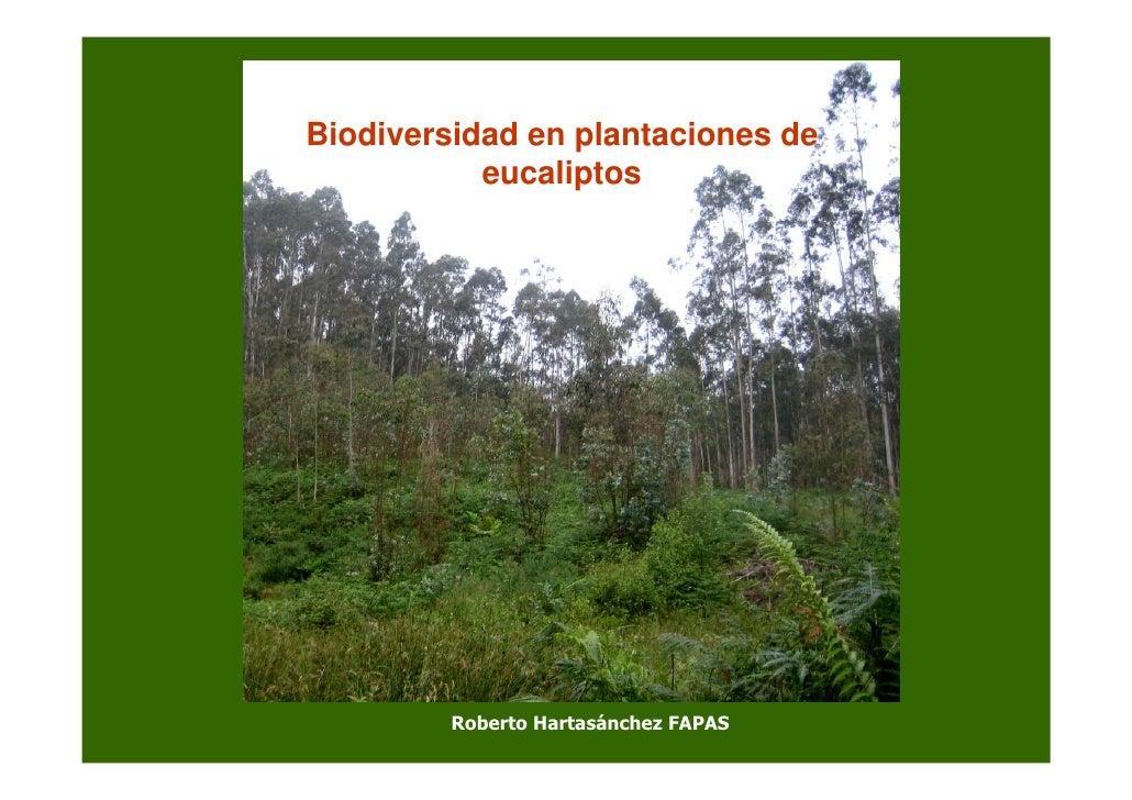 Biodiversidad en plantaciones de            eucaliptos              Roberto Hartasánchez FAPAS
