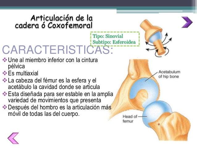 Cintura Pelvica - Articulaciones Cadera