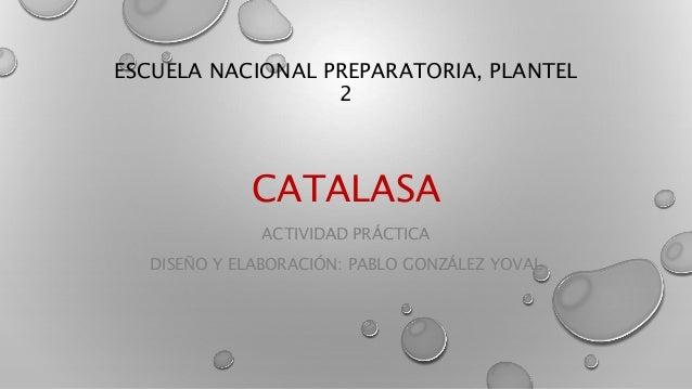 ESCUELA NACIONAL PREPARATORIA, PLANTEL 2 CATALASA ACTIVIDAD PRÁCTICA DISEÑO Y ELABORACIÓN: PABLO GONZÁLEZ YOVAL