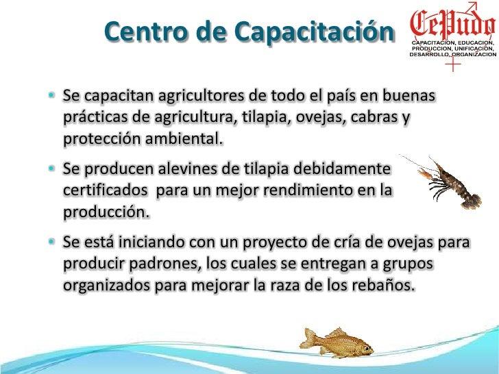 Presentacion cepudo for Cria de tilapia en casa