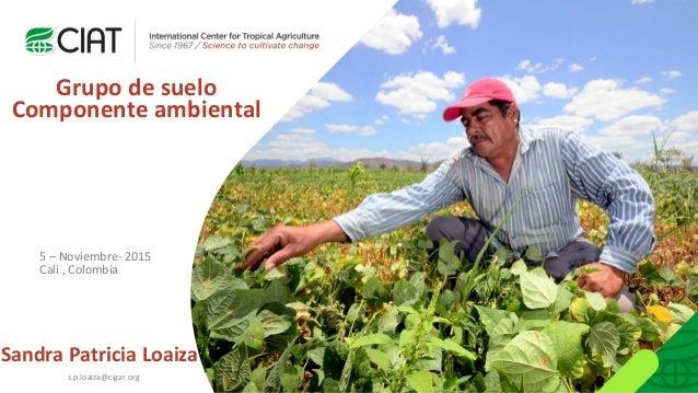 Sandra Patricia Loaiza Grupo de suelo Componente ambiental 5 – Noviembre- 2015 Cali , Colombía s.p.loaiza@cigar.org