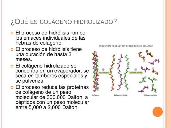 Avant fit collageno - Alimentos que contienen colageno hidrolizado ...