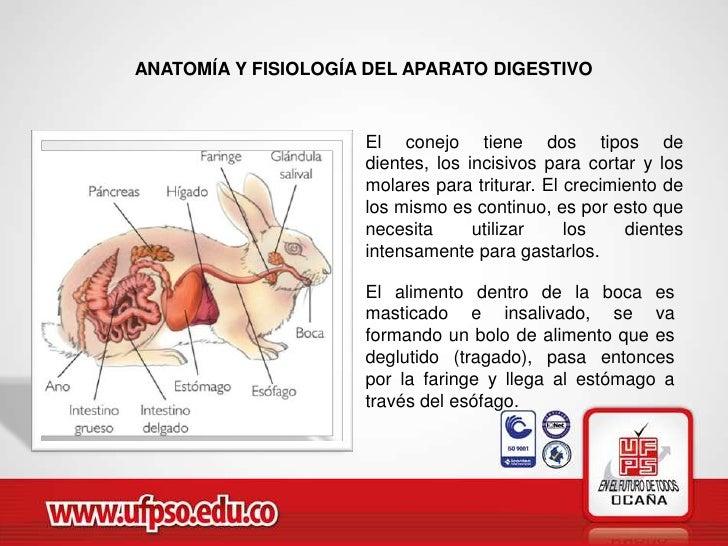 Único Sistema Digestivo Anatomía Y Fisiología Galería - Anatomía de ...
