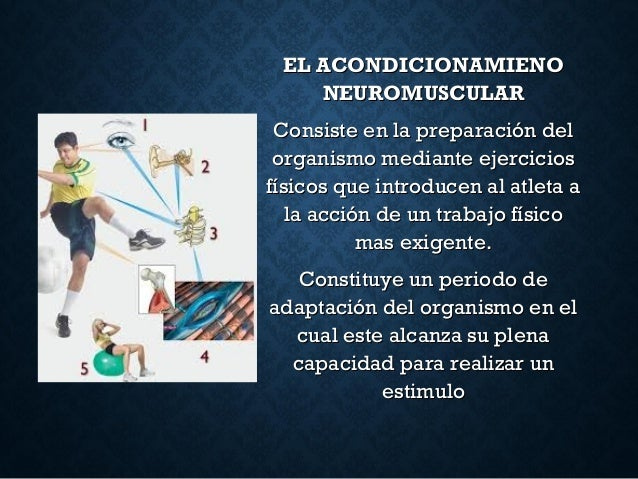 EL ACONDICIONAMIENOEL ACONDICIONAMIENO NEUROMUSCULARNEUROMUSCULAR Consiste en la preparación delConsiste en la preparación...