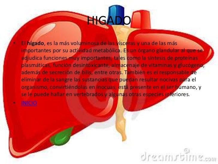 Fantástico Donde Es El Hígado Situado En Las Imágenes Del Cuerpo ...