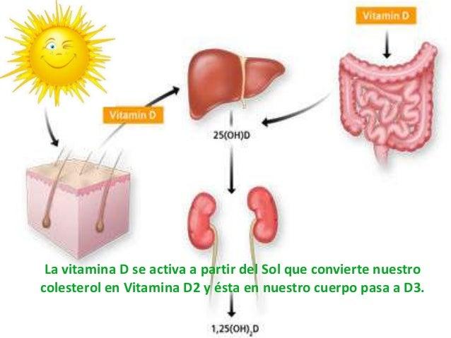 Presentacion curso practico de alimentacion crudivegana - En que alimentos esta la vitamina b12 ...