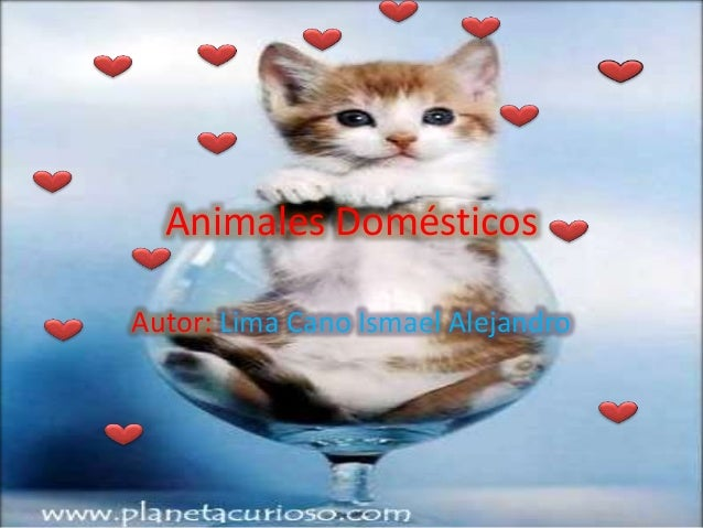 Animales Domésticos Autor: Lima Cano Ismael Alejandro