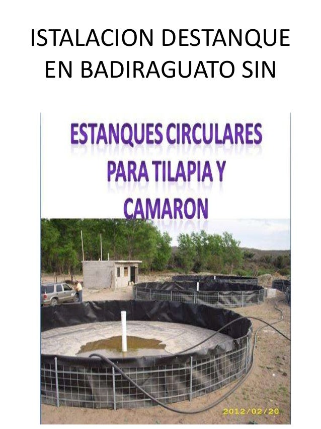 Presentacion de estanques circulares de geomembrana for Engorda de tilapia en estanques rusticos