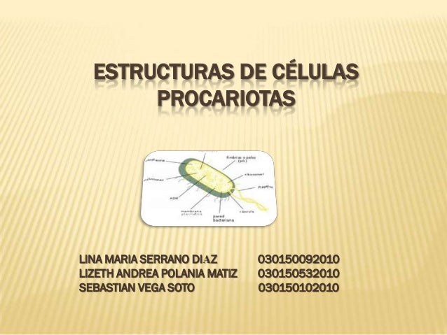 ESTRUCTURAS DE CÉLULAS       PROCARIOTASLINA MARIA SERRANO DIAZ       030150092010LIZETH ANDREA POLANIA MATIZ   0301505320...