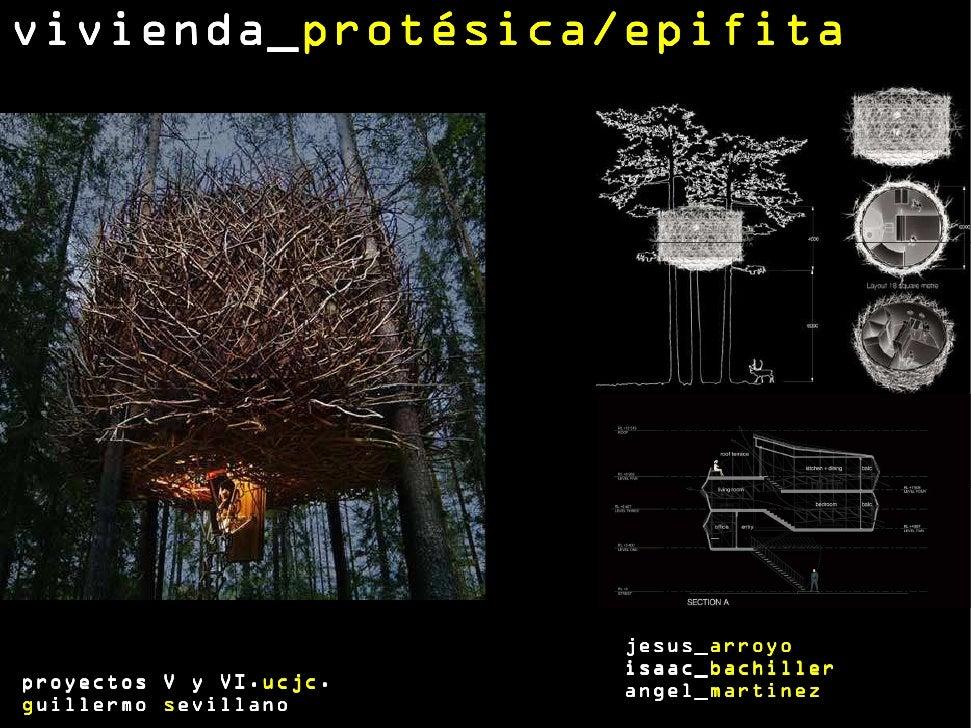 vivienda_protésica/epifitavivienda_protésica/epifita                           jesus_arroyo                           jesu...