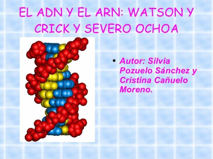EL ADN Y EL ARN: WATSON Y CRICK Y SEVERO OCHOA <ul><li>Autor: Silvia Pozuelo Sánchez y Cristina Cañuelo Moreno. </li></ul>
