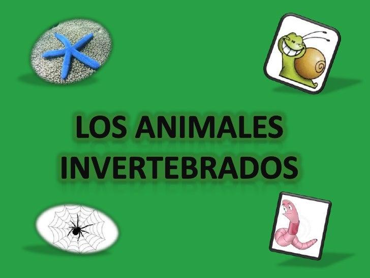 Los animales invertebrados <br />