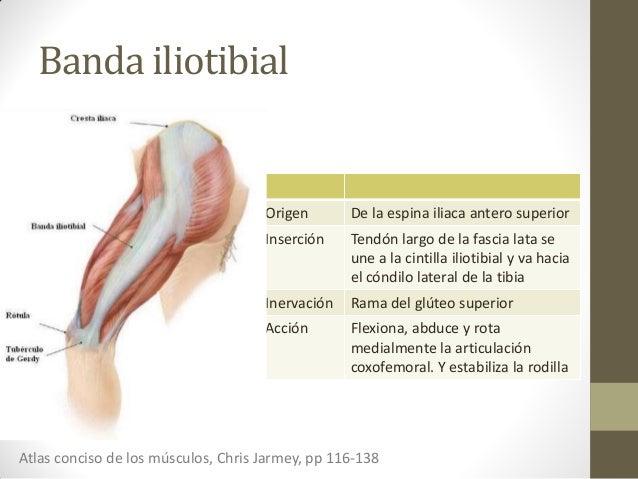 S ndrome de la cintilla iliotibial o rodilla del corredor