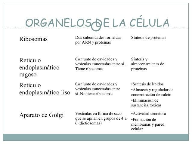 Organelos:  RibosomasSíntesis de polipéptidos (procariontes y eucariontes)