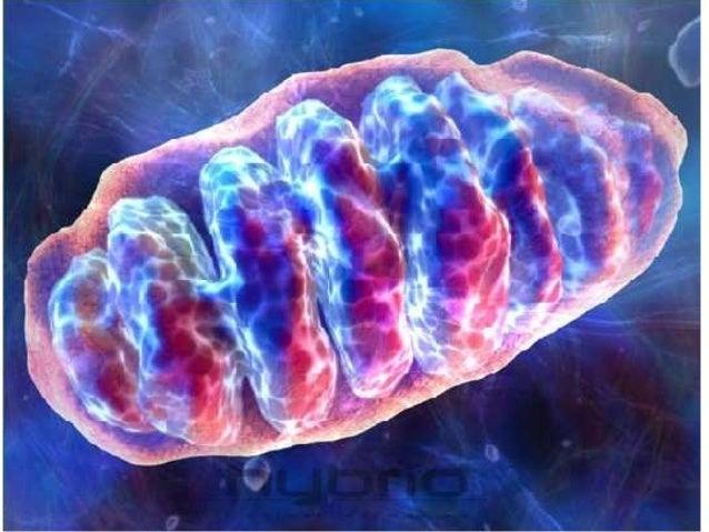 Organelos: Plástidos Cromoplastos:    Plástidos para pigmentación de flores y frutos Cloroplastos:    Contienen un pig...