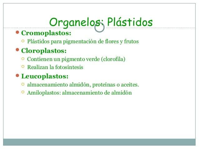 Organelos: PeroxisomasCatálisis de varias reacciones metabólicas. Ejs. Degradación de H2O2 mediante la catalasa; degradac...