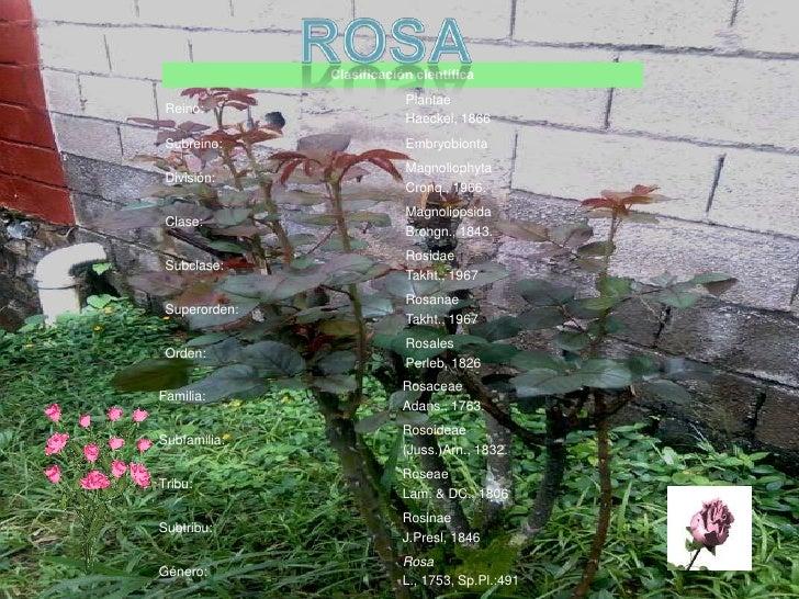 Presentacion de las plantas del colegio