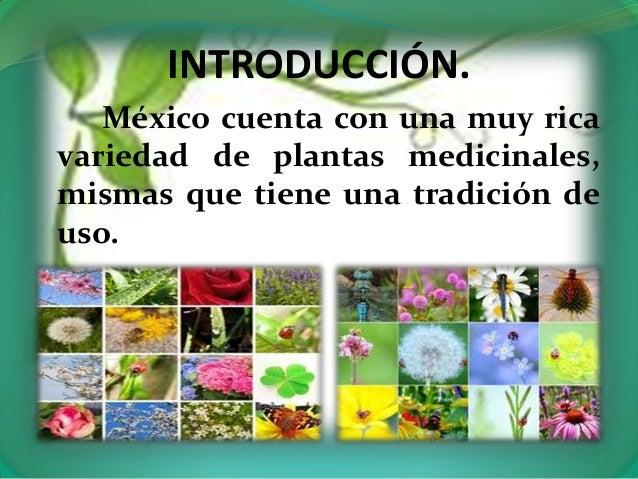 Algunas plantas medicinales for Mezclas de plantas medicinales