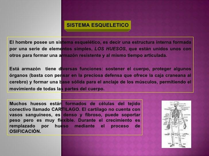 SISTEMA ESQUELETICO El hombre posee un sistema esquelético, es decir una estructura interna formada por una serie de eleme...