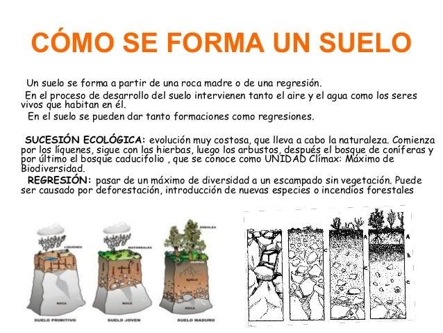 Presentacion del suelo tema 8 for Como se forma y desarrolla el suelo