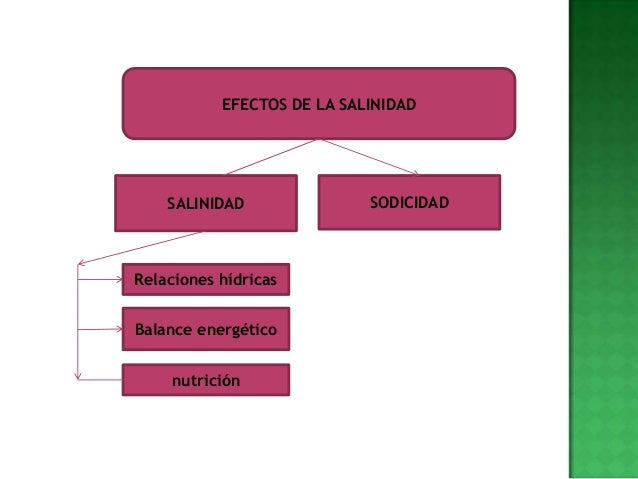 EFECTOS DE LA SALINIDAD    SALINIDAD               SODICIDADRelaciones hídricasBalance energético    nutrición