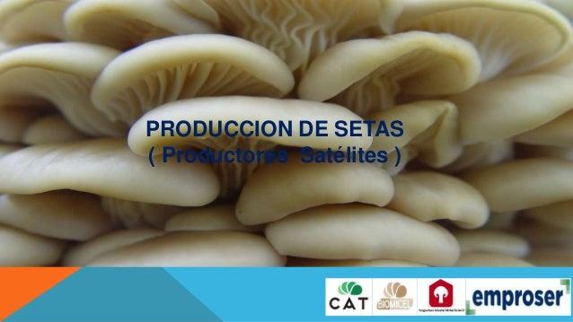 PRODUCCION DE SETAS ( Productores Satélites )
