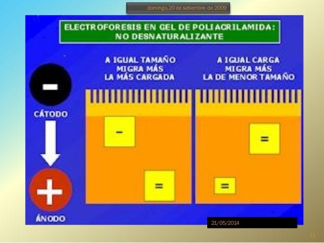 Presentacion de monografia electroforesis