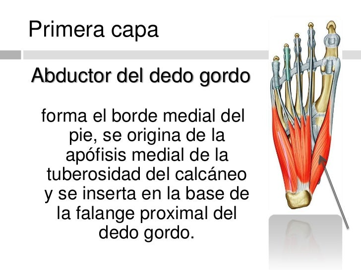 Hermosa Anatomía Del Dedo Gordo Del Pie Colección de Imágenes ...