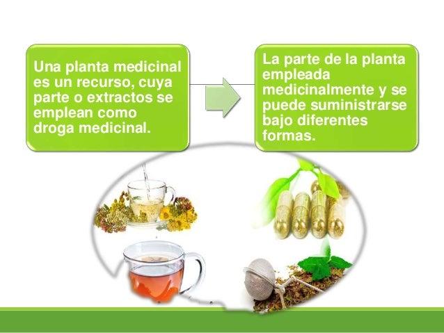 Plantas medicinales for Funcion de las plantas ornamentales