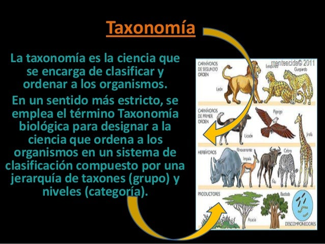 TaxonomíaLa taxonomía es la ciencia quese encarga de clasificar yordenar a los organismos.En un sentido más estricto, seem...
