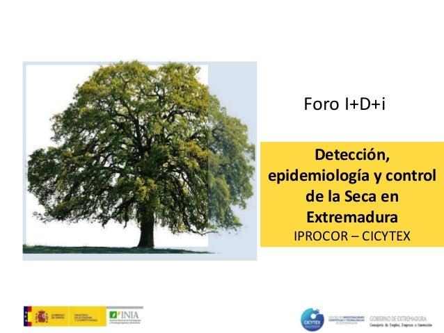 Detección, epidemiología y control de la Seca en Extremadura IPROCOR – CICYTEX Foro I+D+i