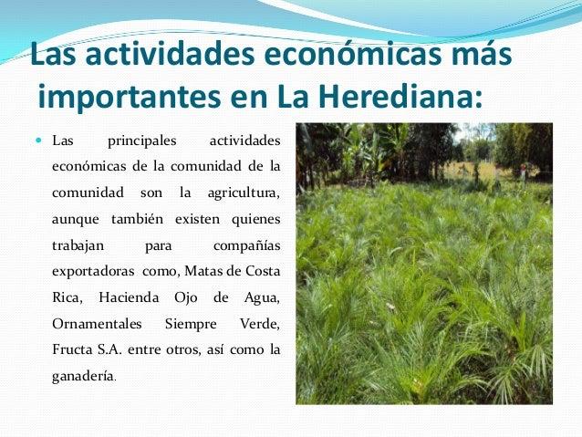 Las actividades económicas más importantes en La Herediana: Las        principales        actividades  económicas de la c...