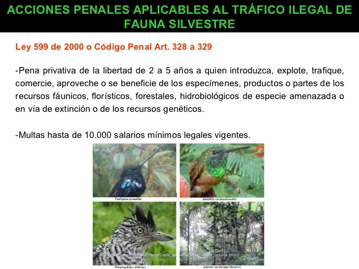 Presentacion fauna de colombia for Porte y trafico de estupefacientes codigo penal