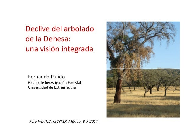 Declive del arbolado de la Dehesa: una visión integrada Fernando Pulido Grupo de Investigación Forestal Universidad de Ext...