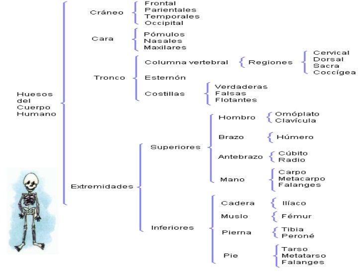 PNI, Cuadro Sinóptico y Diagrama de Flujo