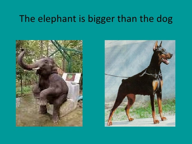 The elephant is bigger than the dog