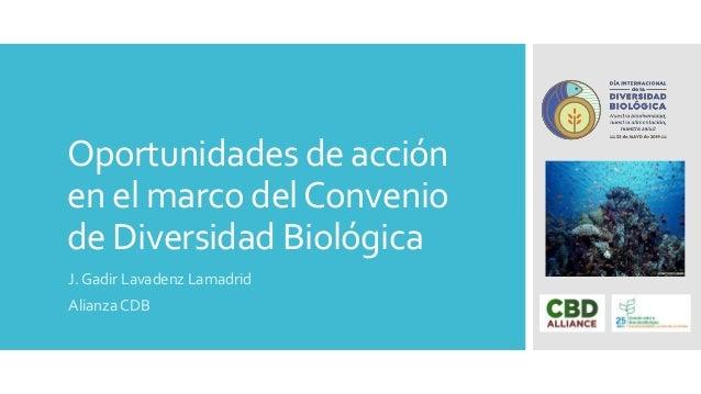 Oportunidades de acción en el marco delConvenio de Diversidad Biológica J. Gadir Lavadenz Lamadrid Alianza CDB