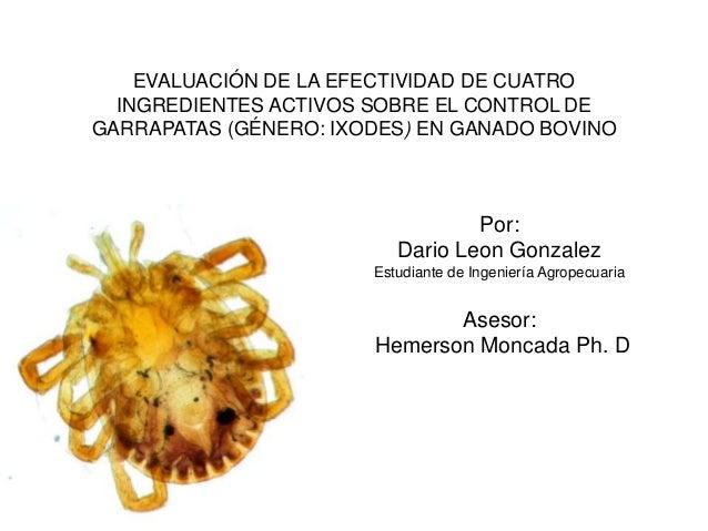 EVALUACIÓN DE LA EFECTIVIDAD DE CUATROINGREDIENTES ACTIVOS SOBRE EL CONTROL DEGARRAPATAS (GÉNERO: IXODES) EN GANADO BOVINO...
