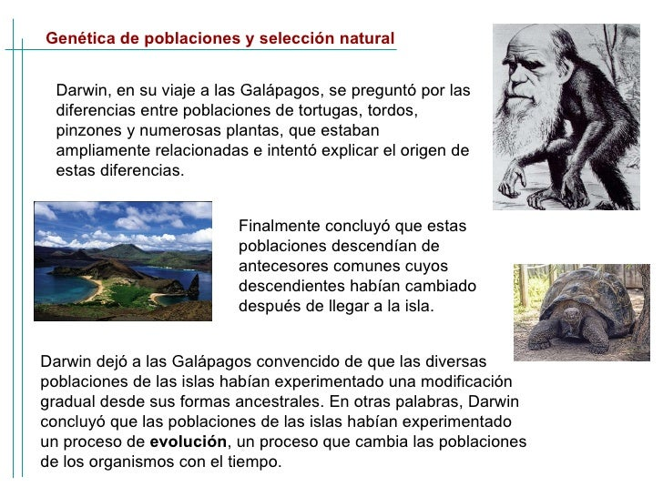 Genética de poblaciones y selección natural Darwin, en su viaje a las Galápagos, se preguntó por las diferencias entre pob...