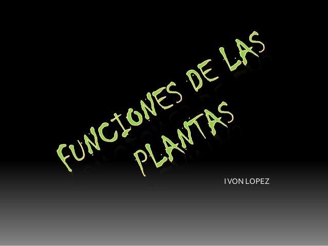 Funciones de las plantas for Funcion de las plantas ornamentales