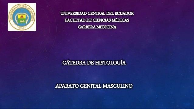UNIVERSIDAD CENTRAL DEL ECUADOR FACULTAD DE CIENCIAS MÉDICAS CARRERA MEDICINA CÁTEDRA DE HISTOLOGÍA APARATO GENITAL MASCUL...
