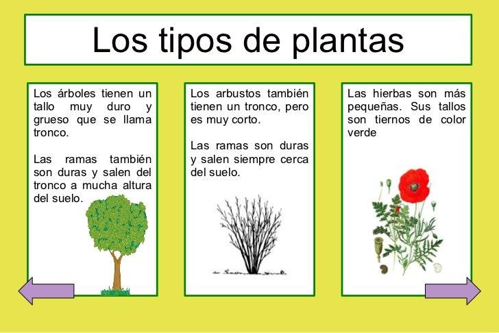 Presentacion impress Las plantas