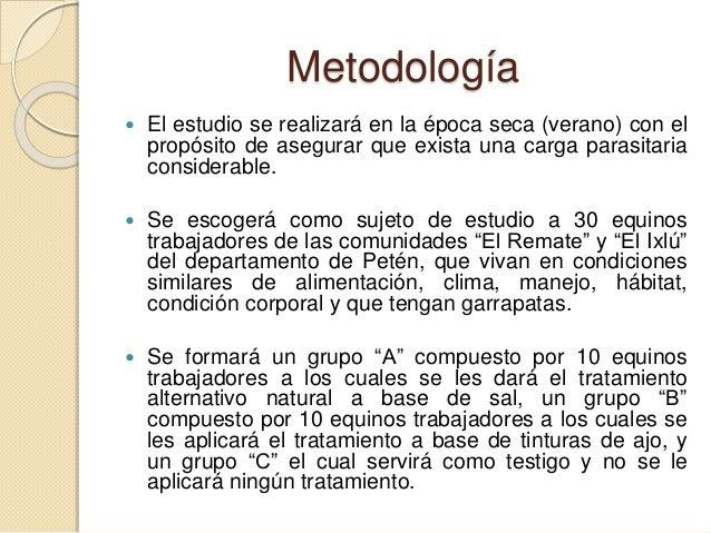 Metodología  El estudio se realizará en la época seca (verano) con el propósito de asegurar que exista una carga parasita...