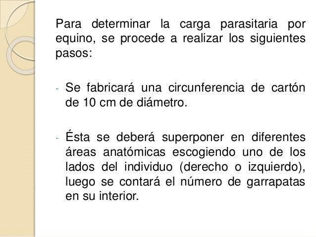 Para determinar la carga parasitaria por equino, se procede a realizar los siguientes pasos: - Se fabricará una circunfere...