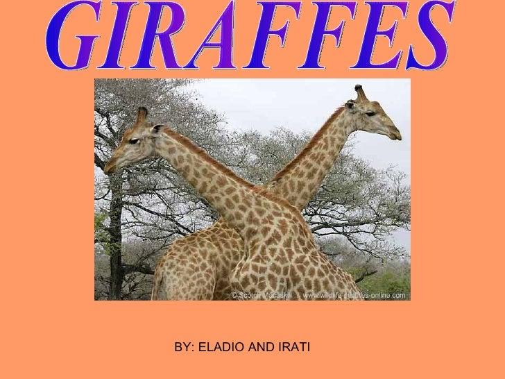GIRAFFES BY: ELADIO AND IRATI
