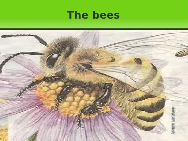 The bees  Pulse para añadir texto