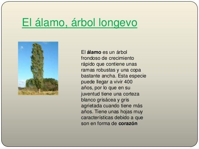 Presentacion lamo power point for Tipos de arboles y caracteristicas