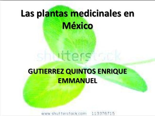 Las plantas medicinales en          México GUTIERREZ QUINTOS ENRIQUE        EMMANUEL